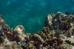 Fin de récif coralien  Photographie stock libre de droits