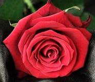 fin de rose de rouge de valentine vers le haut Images stock
