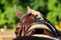Fin de selle de cheval sur le dos de cheval Image libre de droits