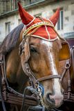 Fin de tête de cheval vers le haut photos libres de droits
