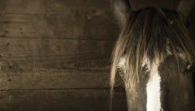 Fin de tête de cheval vers le haut de fond en bois Photographie stock