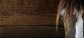 Fin de tête de cheval vers le haut de fond en bois Photographie stock libre de droits