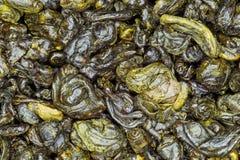 Fin de thé vert de poudre  Image stock