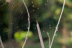 Fin de toile d'araignée sur le fond vert Photos stock