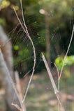 Fin de toile d'araignée sur le fond vert Photographie stock libre de droits