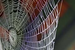 Fin de toile d'araignée vers le haut Photos stock