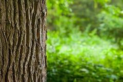 Fin de tronc d'arbre vers le haut Photo libre de droits