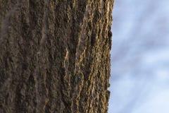 Fin de tronc d'arbre vers le haut Photo stock