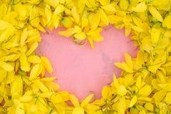 Fin de Wallpeper vers le haut de fleur jaune de nature sur le fond rose image stock
