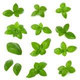 Fin des feuilles vertes fraîches d'herbe de basilic d'isolement sur le fond blanc Basilic Genovese doux photos stock