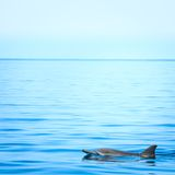 Fin of a dolphin Stock Image