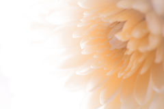 Fin douce et douce d'abrégé sur fond de ton de sépia de style de fleur Images stock