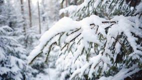 Fin du nord d'arbre de Noël  Forêt et congères d'hiver r clips vidéos