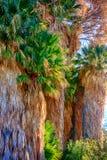 Fin empilée par palmiers ensemble photographie stock