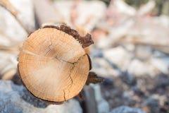 Fin en bois de rondin vers le haut de beau fond de bois de construction de nature Photo stock