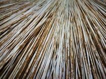 Fin en feuille de palmier de balai  Image libre de droits