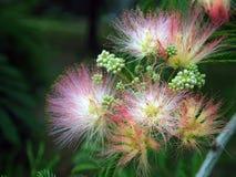 Fin exotique de fleur  Photo libre de droits