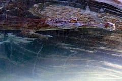 Fin fausse de Gharial vers le haut de détail Photos stock