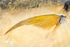 Fin fish Stock Photo