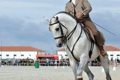 Fin fonctionnante de cheval d'équitation  Photos libres de droits