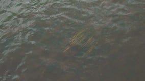 Fin gentille de l'eau  barre L'eau calme sur le lac un jour d'été banque de vidéos