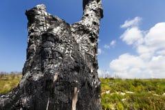 Tronc d'arbre brûlé dans le sauvage Image stock