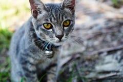 Fin grise de chat tigré  Photos libres de droits