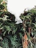Fin impeccable en hiver image libre de droits