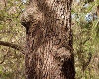Fin inégale de tronc de chêne  Image libre de droits