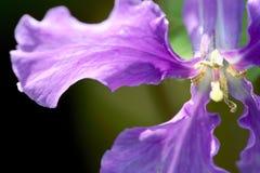 Fin inconnue de fleur vers le haut Images stock