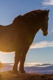 Fin islandaise de coucher du soleil de cheval  Photo libre de droits