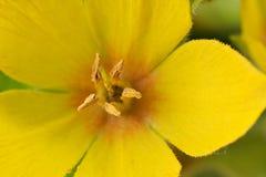 Fin jaune de fleur vers le haut Image libre de droits