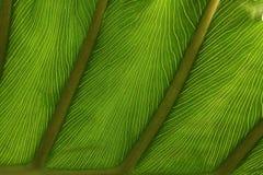 fin leafmodell för detalj Royaltyfria Bilder