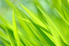 Fin lumineuse d'herbe de ressort dans le domaine avec le fond de bokeh de lumière du soleil Image libre de droits