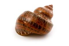 Fin marine de seashell vers le haut photo libre de droits