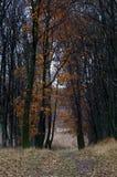 Fin novembre Image libre de droits