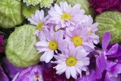 Fin pourprée de fleur vers le haut Photo stock