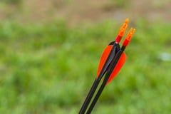 Fin rouge de plumage vers le haut des flèches pour le tir à l'arc images stock