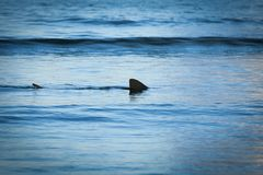 Fin of a shark in the high sea.  Stock Photo