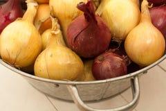 Fin skörd av grönsaker från dina egna trädgård Royaltyfria Bilder