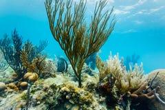 Fin sous-marine vers le haut de vue des formations d'espèce marine et de corail Photographie stock