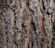 Fin texturisée d'écorce d'arbre Photographie stock libre de droits