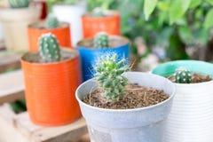Fin vers le haut de cactus dans une boîte sur une table en bois Photo libre de droits