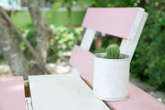 Fin vers le haut de cactus dans une boîte sur une table en bois Images stock