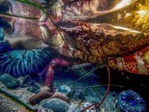 Fin vers le haut de détail sous-marin de Tidepool avec le crabe et l'anémone et la réflexion photos libres de droits