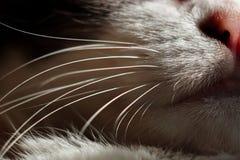 Fin vers le haut de la bouche, du nez, du menton et des favoris du chat Macro pousse images stock