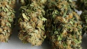 Fin vers le haut de marijuana médicale sèche de cannabis banque de vidéos