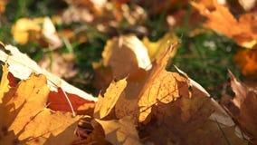 Fin vers le haut des feuilles d'automne sèches sur le pré banque de vidéos