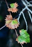 Fin vers le haut des lames d'automne colorées photographie stock