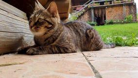 Fin vers le haut du chat calme drôle de portrait se trouvant au sol et se reposant dans une cour de pays Jeune chaton mignon ador clips vidéos